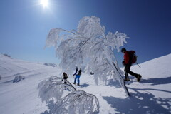 霧氷の花散歩