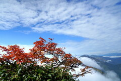 ウロコ雲の秋