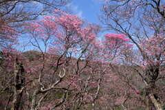 ミツモチ山の春