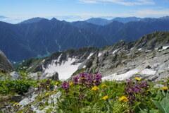夏の花咲く雄山