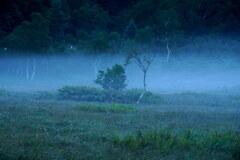 朝霧の田ノ原湿原