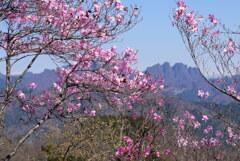 ヒトツバナ咲く鹿岳