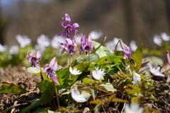 白と紫のコラボ