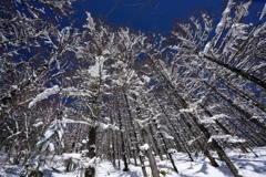 カラマツ通りの冬