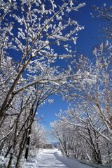 青と雪の雪街道