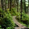 苔の森に囲まれて