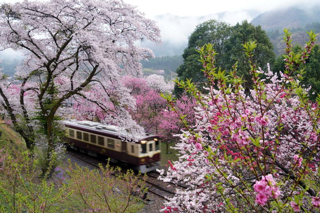 神戸駅の春列車