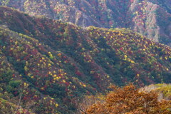 秋の水玉模様