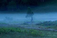 朝霧のベンチ
