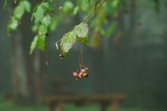 雨のツリバナベンチ