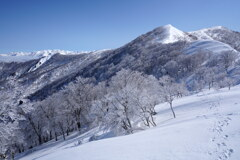霧氷の日白山