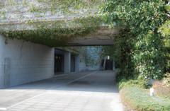 蔦とコンクリート