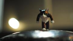 たくましい猫(ハチワレ)