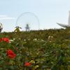 夏も終わりの大阪万博記念公園