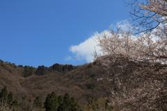 獅子ヶ鼻岩と山桜
