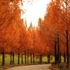紅葉も曲がり角