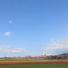 青空の下にチューリップ畑