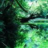 水に映り込む新緑