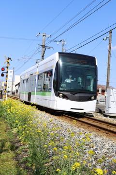 青空と菜の花と電車