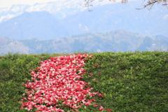 花びら絨毯