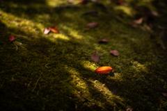 美しい京の秋