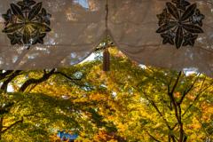美しき京の秋
