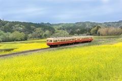 小湊鐵道と菜の花畑