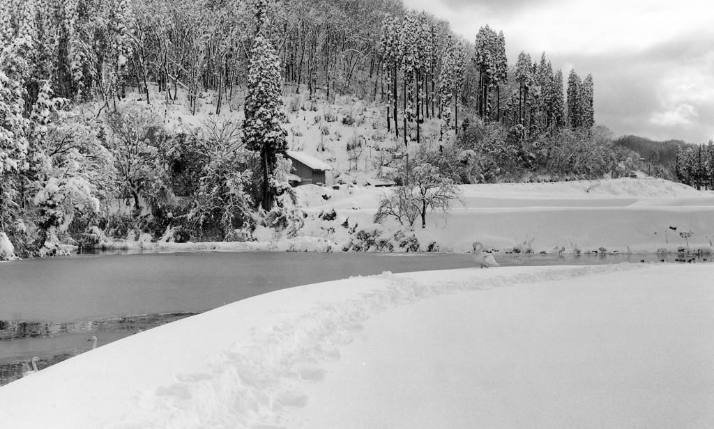 白鳥の池 No.3