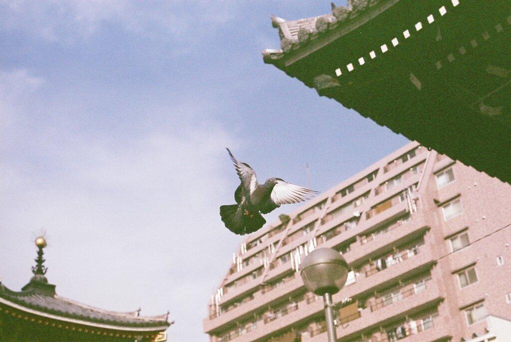 大須観音にて鳩飛翔す