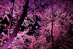 桜並木の隙間から。。。