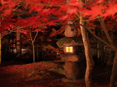 京都 永観堂禅林寺の紅葉 ライトアップ2