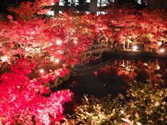 京都 永観堂禅林寺の紅葉 ライトアップ