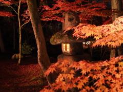 京都 永観堂禅林寺の紅葉 ライトアップ3