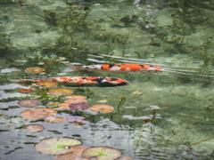 モネの池3