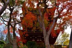 久米寺の塔