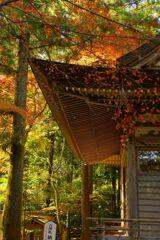 宝登山神社の紅葉 2017年11月