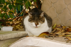 舌を出す猫:ニャロめ!