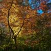 名主の滝公園の紅葉