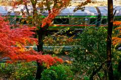 電車と紅葉 2018年12月