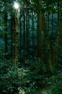 森に差す日差し