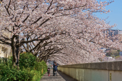 桜(2019年)