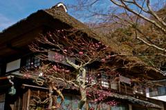 古い家屋と梅