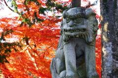 神社の紅葉#2