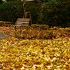 秋模様:寂しい公園