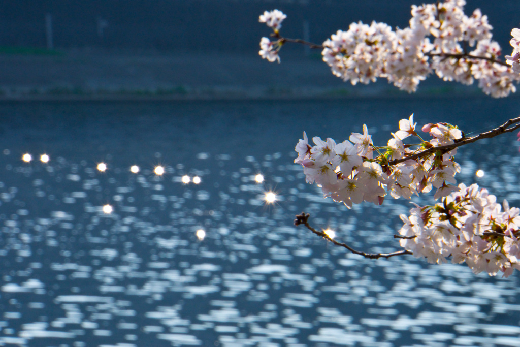桜(2018年)