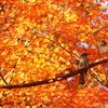 板橋区赤塚植物園の紅葉 2017年12月