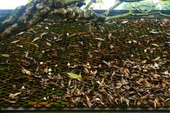 枯れ落ち葉