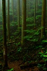 緑にけむる森