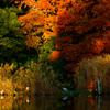 紅葉時期の公園