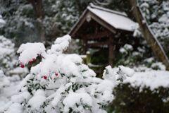 2018年1月の雪